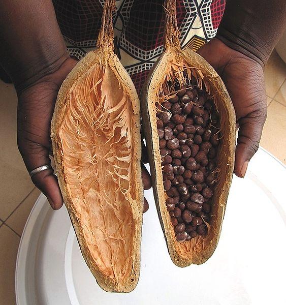 semillas baobab