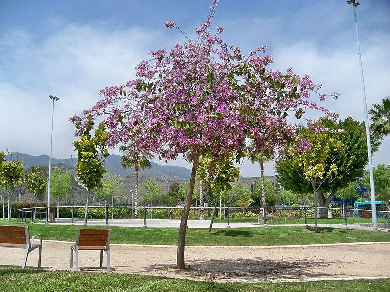 Uña de Vaca Parque de la Alegría Málaga
