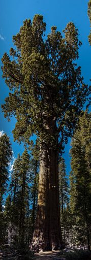 Sequoia National Park General Sherman Tree United States California