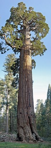 General_Grant_Tree_in_Kings_Canyon_National_Park