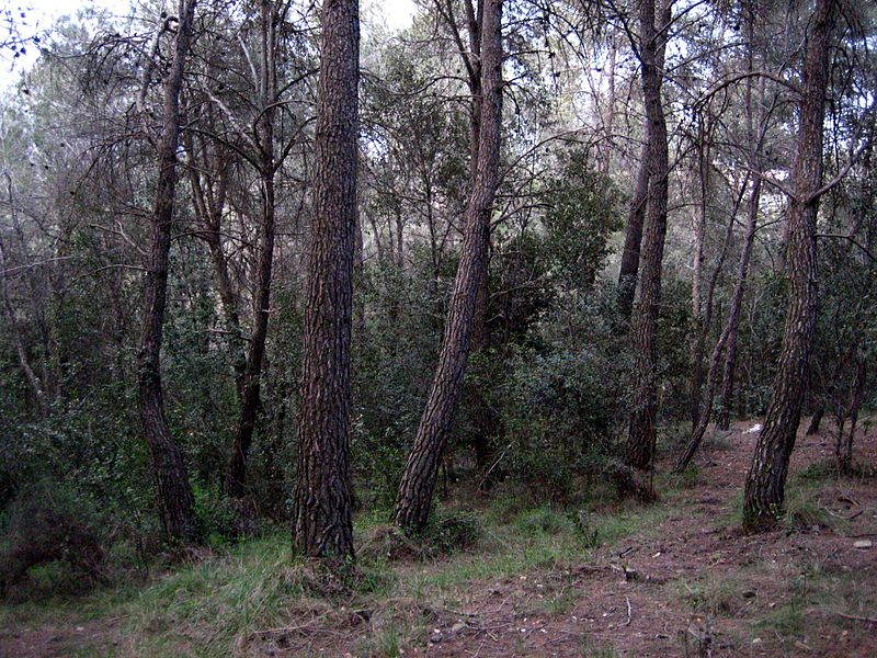 bosque meditarreo encinares