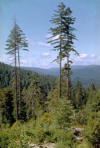 Redwood_National_Park