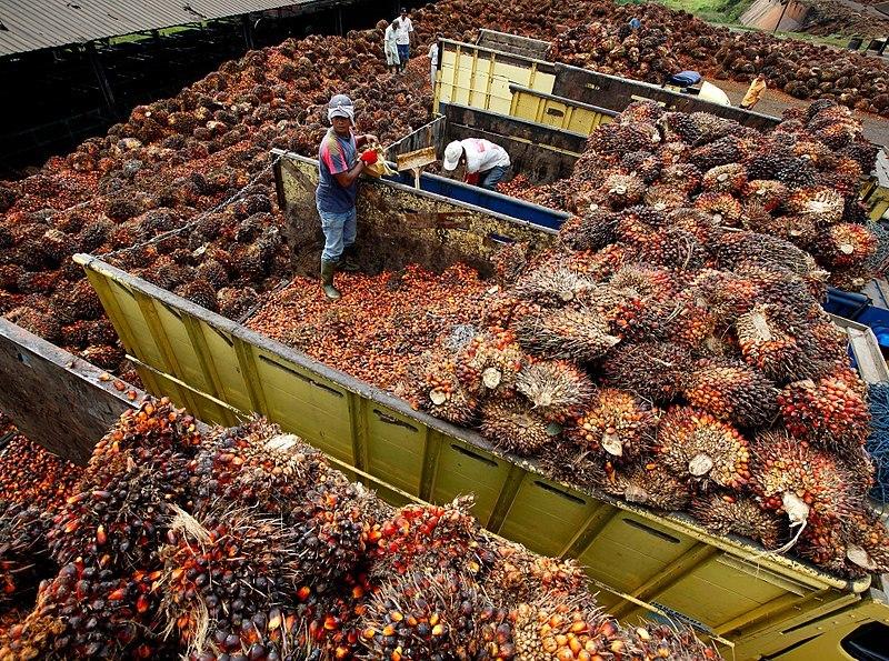 Cargamento de frutos de la palma