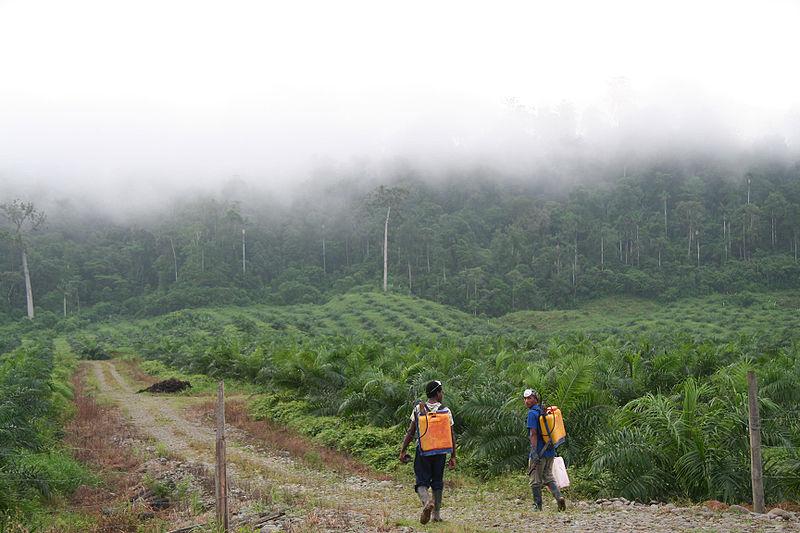 Plantaciones de Elaeis en Malasia