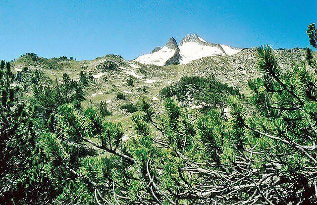 Altos Pirineos 1981